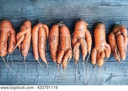 Carrots With Deformed Twisted Forked Roots Distorted And Crooked On Wooden Background