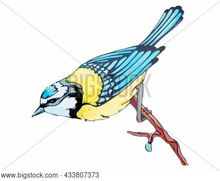 Titmouse With Blue And Yellow Feathers Sits On Branch. Provincial Tit Bird On Tree For Natural Decor