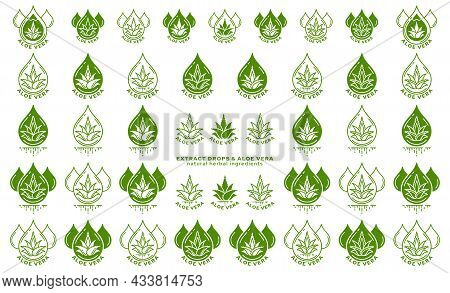 Stamps For Packaging Of Cosmetic Products. The Label Is Aloe Vera Extract. Plant Icon With Flowing I
