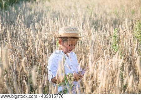 Cute Kid Boy In Straw Hat Walking On Wheat  Field And Watching Into The Distance. A Child Walks Outs