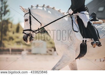A Beautiful White Horse With A Braided Mane And A Rider In The Saddle Performs At Dressage Competiti