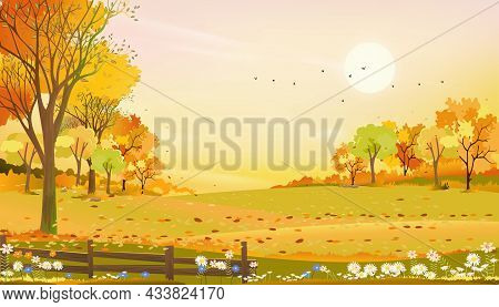 Autumn Rural Landscape Farm Fields And Forest Trees With Orange Sky Sunset, Vector Cartoon Backgroun