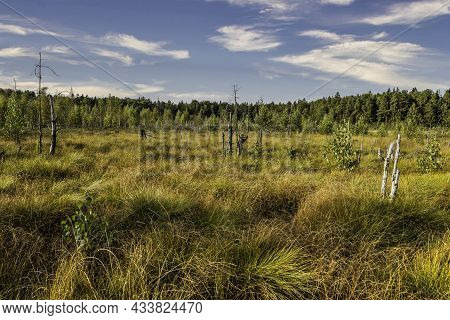 Wetlands Surrounded By Vegetation On A Sunny Day