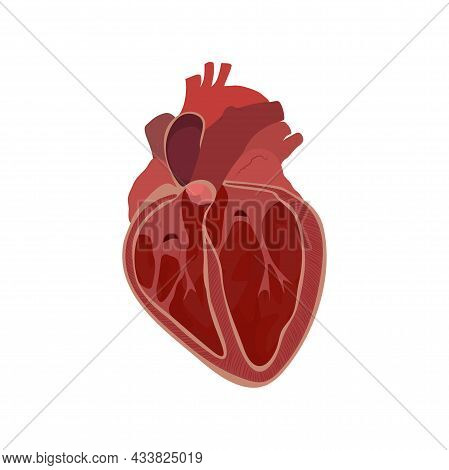 Internal Inside Structure Of The Heart. Pulmonary Valve Closed. Vector Flat Anatomy Medical Illustra