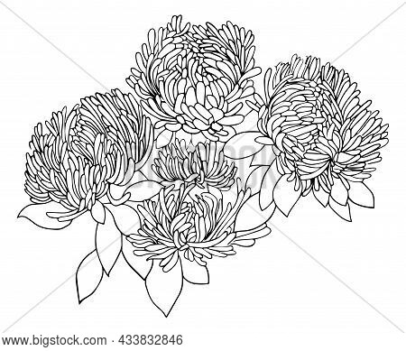 Doodle Flowers Growing In Garden Vector Illustration Page For Coloring Book. Black And White Handdra