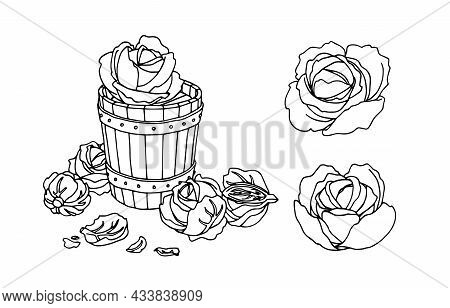 A Set Of Cabbage Heads With Wooden Tub. Salting And Marinating In A Barrel. A Vector Illustration Wi