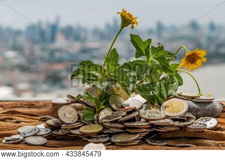 The Saplings That Grow On The Pile Of Coins. Saving Money Allows Money To Grow. Selective Focus.