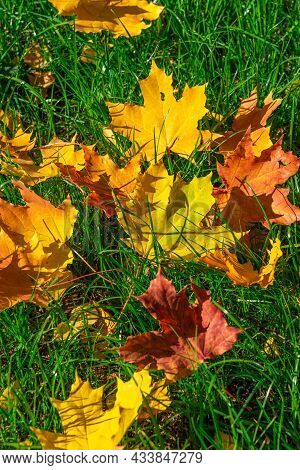 Fallen Yellow Leaves Lie On The Green Grass. Autumn Background Of Leaves And Grass. The Season Of Le