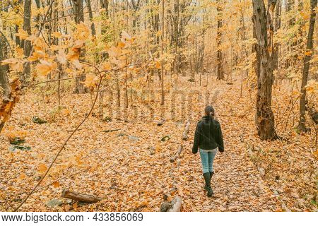 Autumn forest travel hike fall woman walking in in Quebec, Canada. Maple trees and yellow foliage leaves.