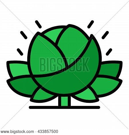 Eco Farm Cabbage Icon. Outline Eco Farm Cabbage Vector Icon Color Flat Isolated