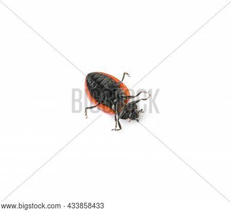 One Overturned Red Ladybug Isolated On White