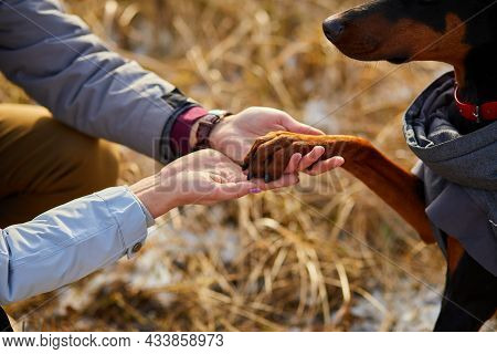 Two Hands Family And Dogs Paw- Woman, Man And Doberman