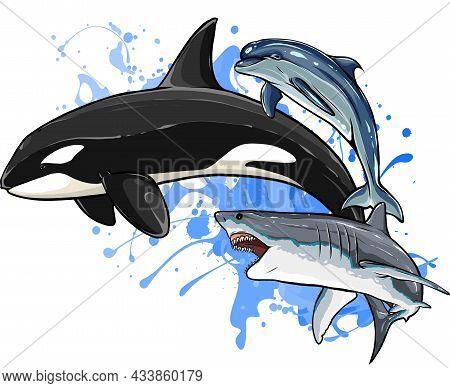 Marine, Sea, Aquatic Animals Of Ocean And Marine Species, Sea Creatures