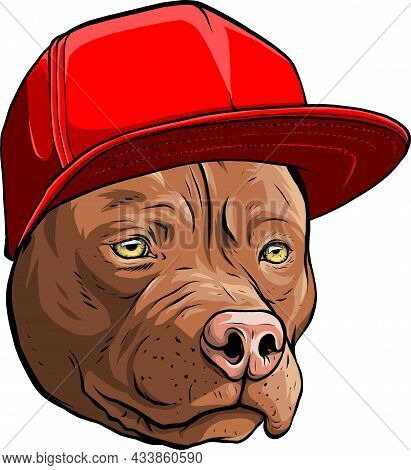 Vector Illustration Of Pitbull Dog In Cap.