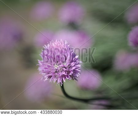 Nice Closeup View Of A Purple Flower, Great Amazing Summer Beautiful Time Background