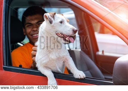 Dog Jack Russell Sits In The Car With His Smiling Young African American Owner In The Front Seat