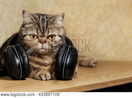 Funny Cat With Big Headphone. Portrait Of A Pet. On The Table Lies A Beautiful Tortoiseshell Cat Sco