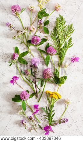 medical flowers herbs, alternative medicine healthy lifestyle. clover milfoil tansy rosebay