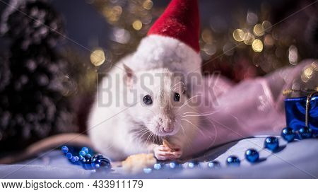New Year's Rabbit Sitting On Artificial Snow In A Hat In The Background Lights Christmas Tree