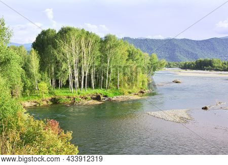 Birch Grove On The Slope Of The River Bank In The Altai Mountains Under The Blue Sky. Siberia, Russi