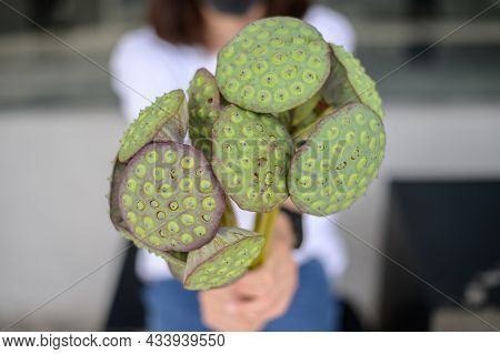 Cropped Shot Of Someone Holding Lotus Seed Pods Before Eating. Lotus Seeds Are Used In Asian Cuisine