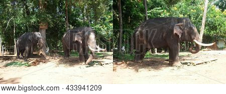 Elephant Park Or Sanctuary In Asia. Collage Of Two Photos To Advertise Travel, Vacation Or Tourist T