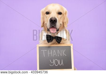 The Dog Is Holding A Black Sign With The Words Thank You. Golden Retriever Sits On A Purple Backgrou