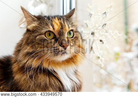 Adorable Cat At The Window On A Winter Background, Close-up. Christmas And New Year Concept.