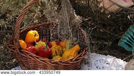 Fall Harvest Still Life Of Red Tomatoes, Yellow Bell Peppers And Orange Pumpkins In Vintage Wicker B