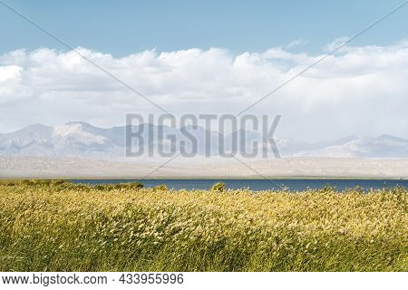 Reed Marsh With Lake Mountain Cloud And Blue Sky Background
