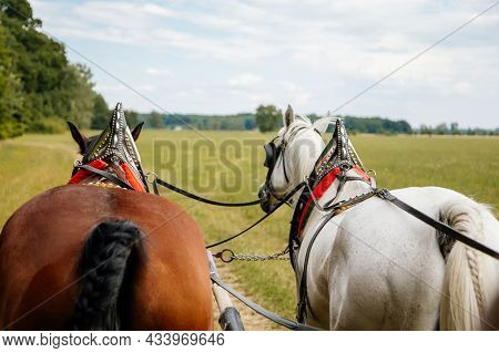 Januv Hrad, South Moravia, Czech Republic, 04 July 2021: Matched Pair Of Draft Brown And White Horse