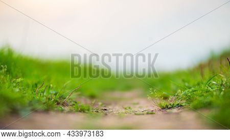 Green Grass At The Edge Of A Country Road. Strong Blurry Background. Copy Space.