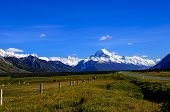 Sheep and cows grazing with Mt. Cook in the background on the south Island of New Zealand poster