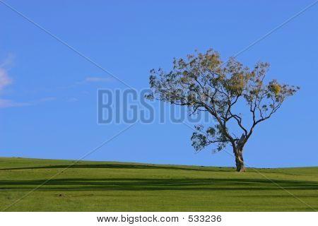 Bly Sky Green Grass