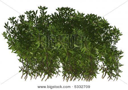 Green Plant Shrub