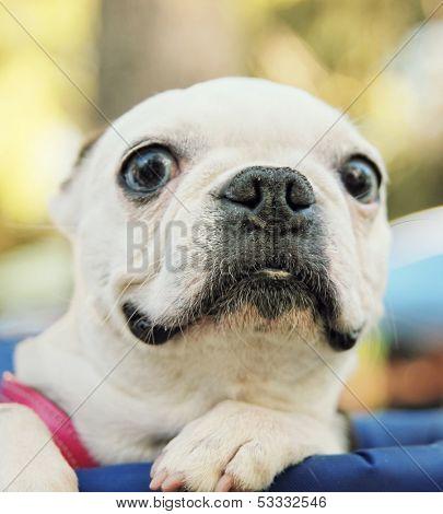 a cute dog in a back pack in a local park