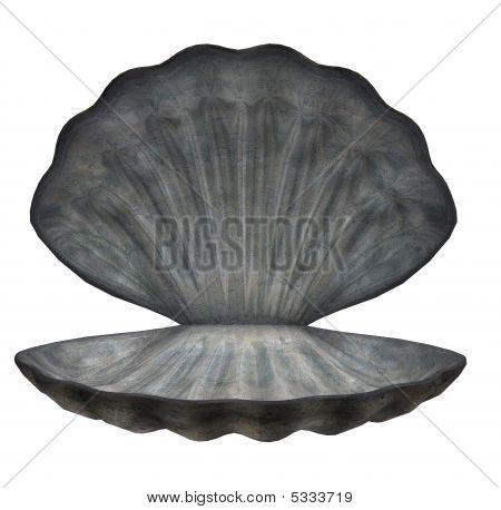 Large Sea Shell
