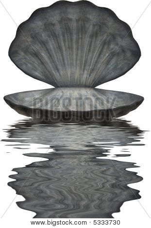 Large Sea Shell In Water