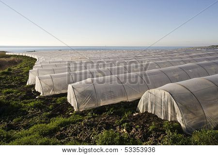 greenhouse in sicily
