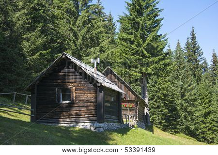 Wooden Cottage in Green Forest