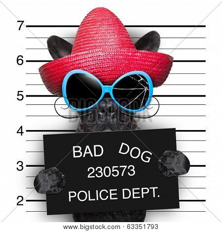 mugshot of very bad mexican wanted dog poster