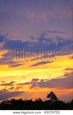 Spectacular sunset above dark forest with golden and purple hues in Ontario, Canada.