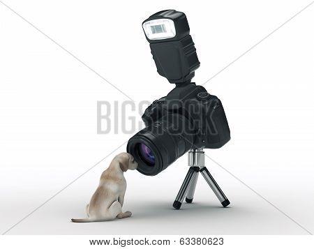 photo camera and dog