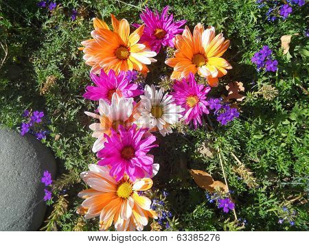 Alphabet Letter P in Multicolored Flowers