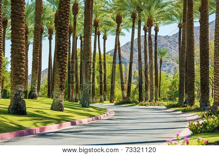 Palm Springs Road California United States. Palm Trees. poster