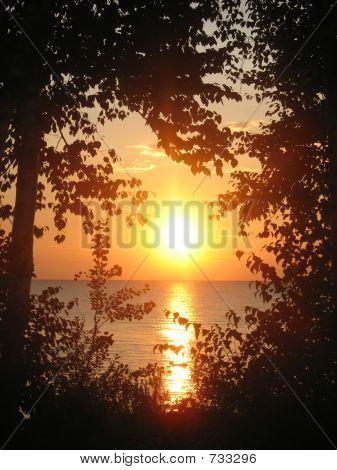 Sunrise Between Birches
