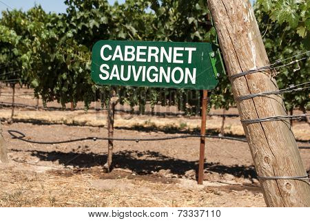 Vineyard Sign For Cabernet Sauvignon Grapes On The Vine
