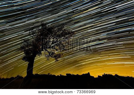 beautiful sky at night with startrails and silhouette of a tree