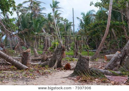 Carribean Storm