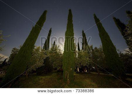 Tuscan Garden At Night